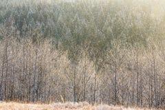 Floresta congelada imagens de stock royalty free