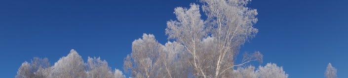 Floresta congelada Fotografia de Stock Royalty Free