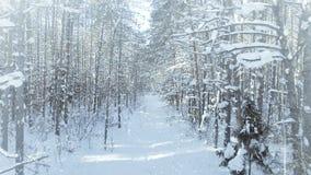 Floresta congelada AÉREA do inverno densa, arvoredo da floresta, com uhd agradável da queda de neve e do sol 4k filme