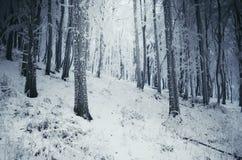 Floresta congelada com geada em árvores Fotografia de Stock