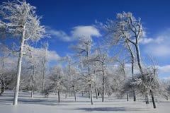 Floresta congelada inverno na neve fotografia de stock royalty free