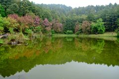 Floresta cor-de-rosa Imagem de Stock Royalty Free