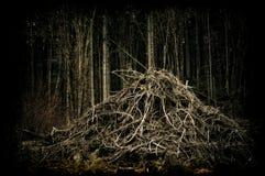 Floresta da área deserta   Fotografia de Stock Royalty Free