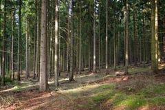 Floresta da árvore Fotografia de Stock