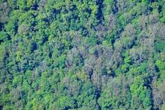 Floresta da árvore Fotografia de Stock Royalty Free