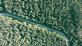 Floresta da árvore de abeto e a estrada do carro filme