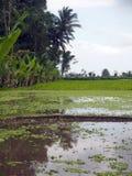 Floresta da almofada de arroz, da palma e da banana em platôs em Bali central, Indonésia foto de stock royalty free