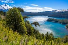 Floresta da araucária no parque nacional de Conguillio, o Chile Fotos de Stock Royalty Free