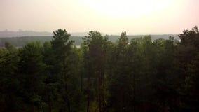 Floresta da calha do voo video estoque