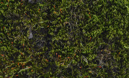 Floresta da casca de árvore Fotografia de Stock Royalty Free