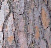 Floresta da casca de árvore Fotos de Stock