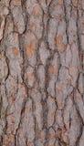 Floresta da casca de árvore Imagem de Stock