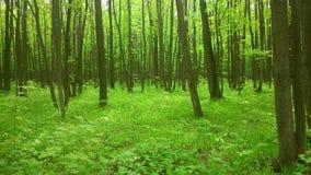 Floresta da cidade Fotos de Stock Royalty Free