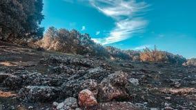 Floresta da cidade do ifrane foto de stock royalty free