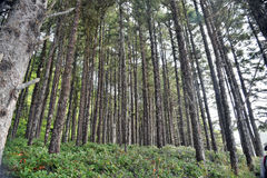 Floresta da costa de Oregon Fotografia de Stock Royalty Free