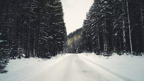 Floresta da estrada Fotografia de Stock Royalty Free