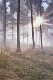 Floresta da faia Imagens de Stock
