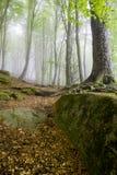 Floresta da faia Imagem de Stock