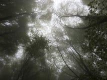 Floresta da faia Fotografia de Stock
