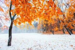 Floresta da faia da montanha de outubro com primeira neve do inverno fotografia de stock royalty free