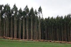Floresta da faia do Catlins na baía do objeto antigo, Nova Zelândia imagens de stock