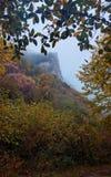 Floresta da faia no outono fotos de stock royalty free