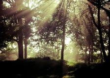 Floresta da fantasia Foto de Stock