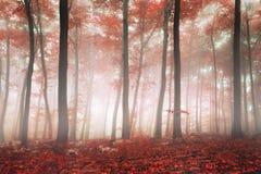 Floresta da fantasia Fotos de Stock Royalty Free