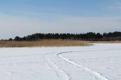 A floresta da grama seca e do pinho na neve foto de stock
