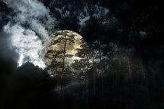 Floresta da Lua cheia Imagem de Stock