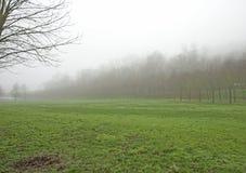 Floresta da manhã com névoa fotos de stock