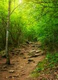 Floresta da mola Imagem de Stock