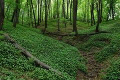 Floresta da mola Foto de Stock
