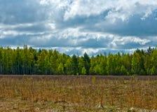 Floresta da mola Fotografia de Stock Royalty Free