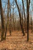 Floresta da mola Fotos de Stock Royalty Free