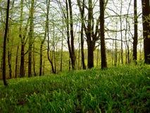 Floresta da mola fotografia de stock