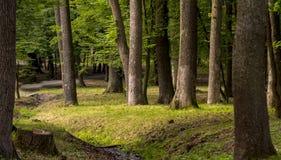 Floresta da mola com opinião superior de florescência de árvores de fruto fotografia de stock