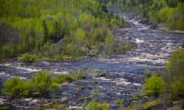 Floresta da mola e rio Raging fotos de stock