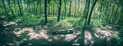 Floresta da mola, filtro análogo fotografia de stock royalty free