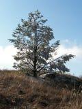 Floresta da mola na manhã nas montanhas crimeanas foto de stock