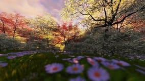 Floresta da mola, nascer do sol do timelapse filme