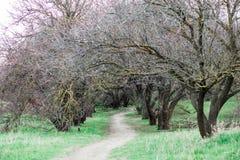Floresta da mola, ?rvores sem folhas e grama verde imagem de stock royalty free