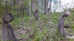 A floresta da mola fotografia de stock