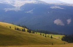 Floresta da montanha Fotografia de Stock Royalty Free
