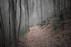 Floresta da montanha Imagens de Stock Royalty Free
