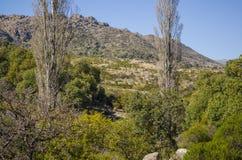 Floresta da montanha Imagens de Stock