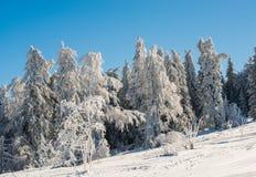 Floresta da montanha Foto de Stock