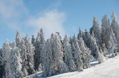 Floresta da montanha Imagem de Stock Royalty Free