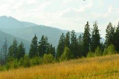Floresta da montanha Foto de Stock Royalty Free