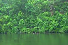 A floresta da montanha com o rio da chuva e do kwai ajardina no kanchanab Fotografia de Stock